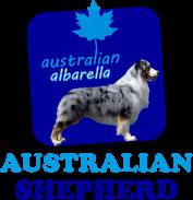 Australian shepherd dell'Albarella